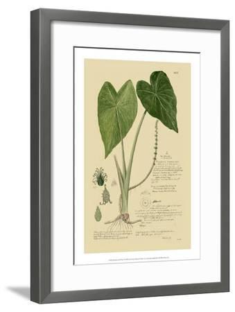 Aroid Plant I-A^ Descubes-Framed Giclee Print