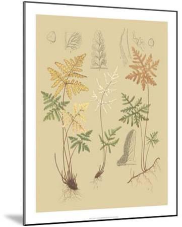 Nature's Lace I-C^e^ Faxon-Mounted Giclee Print