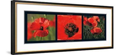 Coquelicots en Provence-Laurent Pinsard-Framed Art Print