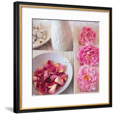 Salmon Rose II-Bill Philip-Framed Art Print