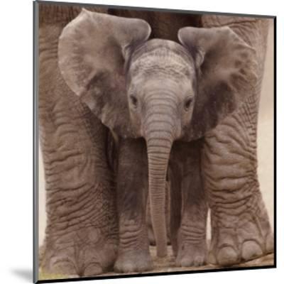 Big Ears--Mounted Art Print