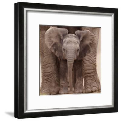 Big Ears--Framed Art Print