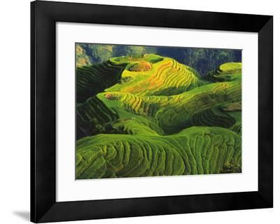 Rizieres en Terrasse, Chine-Keren Su-Framed Art Print