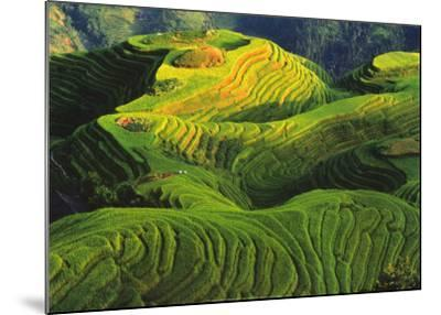 Rizieres en Terrasse, Chine-Keren Su-Mounted Art Print