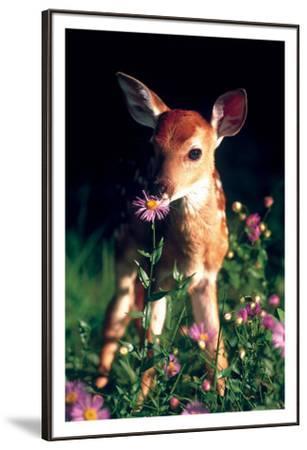 Fawn--Framed Premium Giclee Print