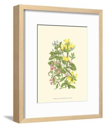 Summer Garden XI-Anne Pratt-Framed Art Print