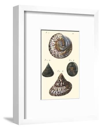 Sea Shells II-Denis Diderot-Framed Art Print