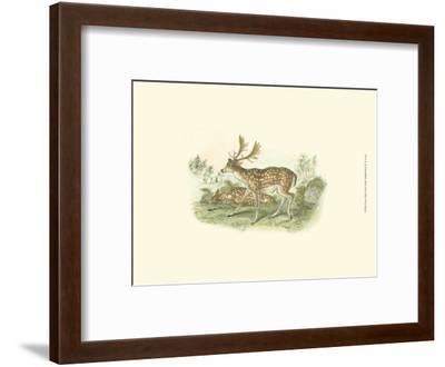 Petite Fallow Deer-W^h^ Lizars-Framed Art Print