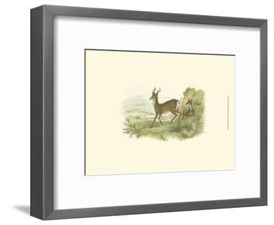 Petite Row Deer-W^h^ Lizars-Framed Art Print