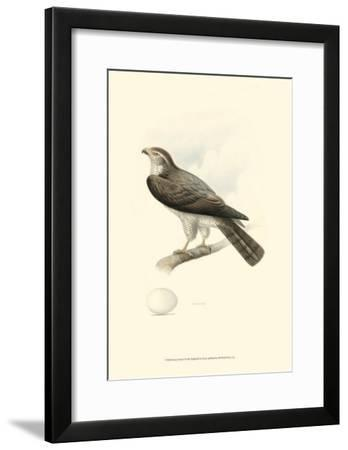 Meyer's Hawk I-Meyer-Framed Art Print