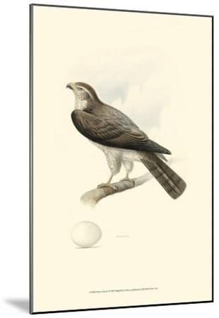 Meyer's Hawk I-Meyer-Mounted Art Print