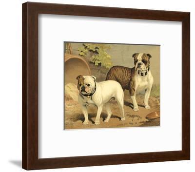 Bull Dogs-Vero Shaw-Framed Art Print