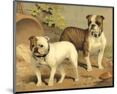 Bull Dogs-Vero Shaw-Mounted Art Print