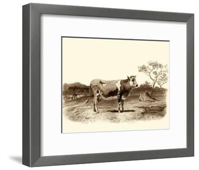Bovine I-Emile Van Marck-Framed Art Print