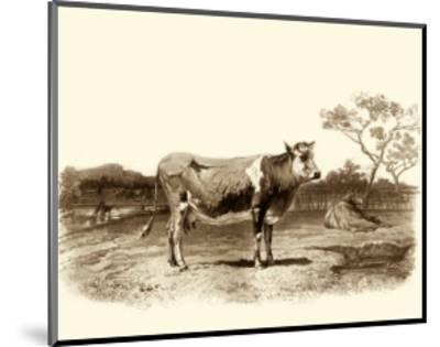 Bovine I-Emile Van Marck-Mounted Art Print