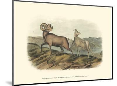 Rocky Mountain Sheep-John James Audubon-Mounted Art Print