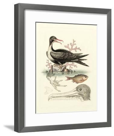 Aquatic Birds I-George Edwards-Framed Giclee Print