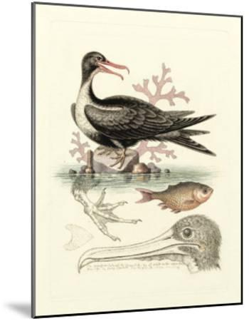 Aquatic Birds I-George Edwards-Mounted Giclee Print