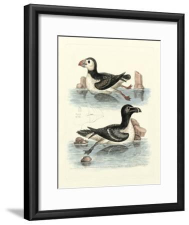 Aquatic Birds II-George Edwards-Framed Giclee Print