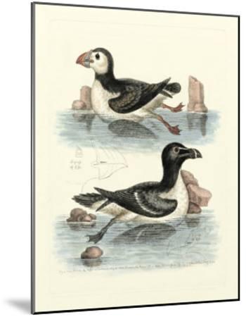 Aquatic Birds II-George Edwards-Mounted Giclee Print