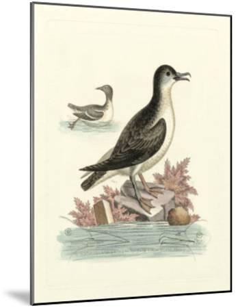 Aquatic Birds III-George Edwards-Mounted Giclee Print