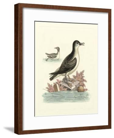 Aquatic Birds III-George Edwards-Framed Giclee Print