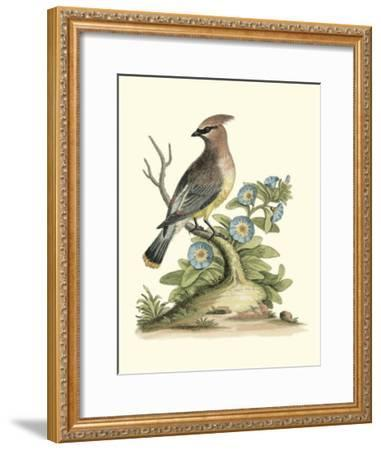 Poised in Nature III-George Edwards-Framed Giclee Print