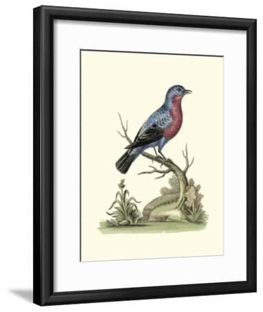 Poised in Nature IV-George Edwards-Framed Giclee Print