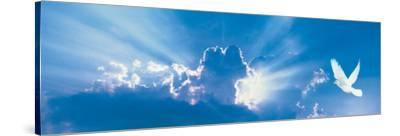 Sky and Dove--Stretched Canvas Print