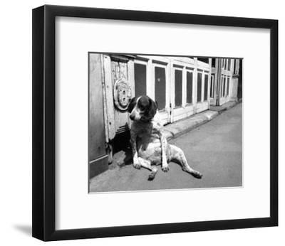 Sitting Dog--Framed Art Print