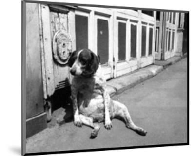 Sitting Dog--Mounted Art Print