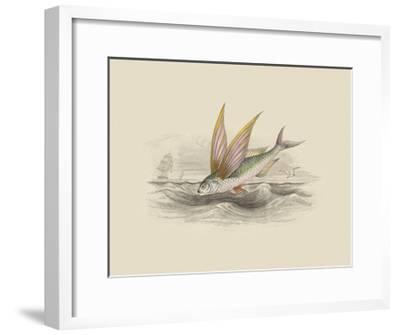 Flying Fish II--Framed Premium Giclee Print