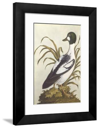 Silesian Birds I--Framed Premium Giclee Print