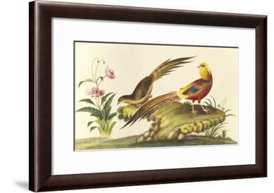 Pheasants--Framed Premium Giclee Print