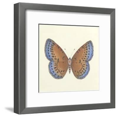 Butterfly III-Sophie Golaz-Framed Premium Giclee Print