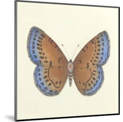 Butterfly III-Sophie Golaz-Mounted Premium Giclee Print