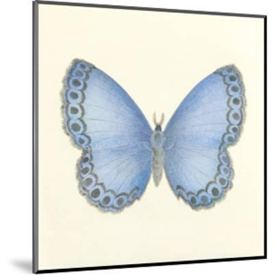 Butterfly IV-Sophie Golaz-Mounted Premium Giclee Print