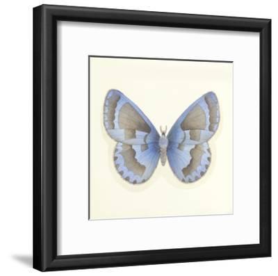 Butterfly VII-Sophie Golaz-Framed Premium Giclee Print