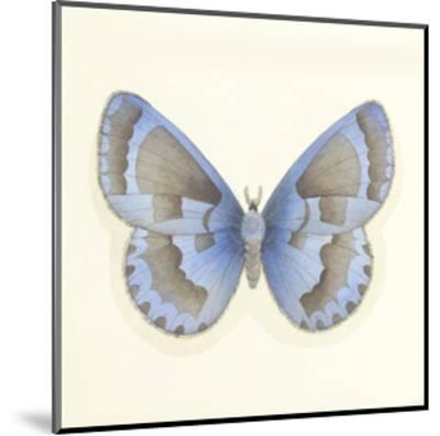 Butterfly VII-Sophie Golaz-Mounted Premium Giclee Print