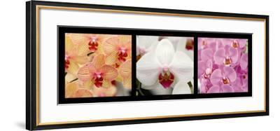 Orchids-Laurent Pinsard-Framed Art Print