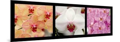 Orchids-Laurent Pinsard-Mounted Art Print