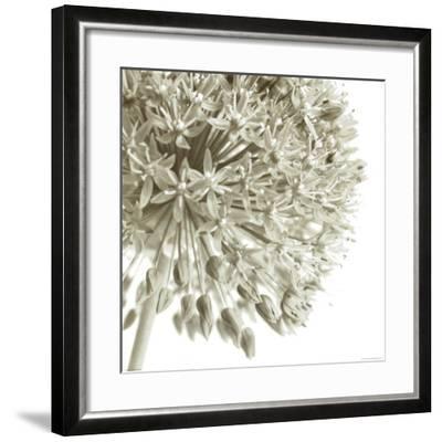 Allium I-C^ Sands-Framed Art Print