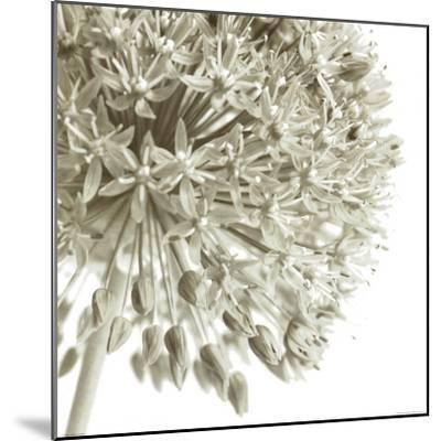 Allium I-C^ Sands-Mounted Art Print