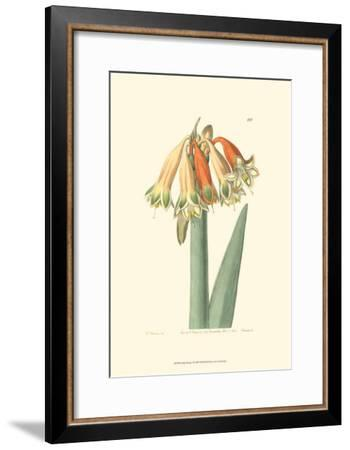Golden Beauty I-Sydenham Teast Edwards-Framed Art Print