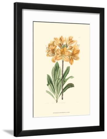 Golden Beauty II-Sydenham Teast Edwards-Framed Art Print