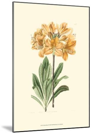 Golden Beauty II-Sydenham Teast Edwards-Mounted Art Print