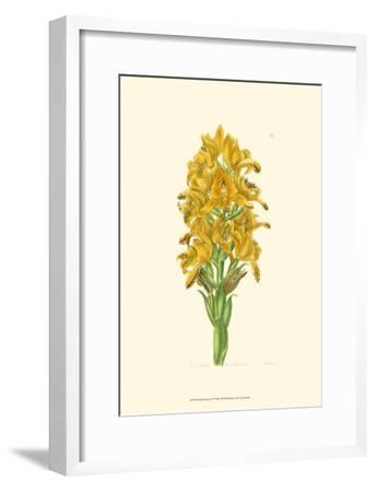 Golden Beauty IV-Sydenham Teast Edwards-Framed Art Print