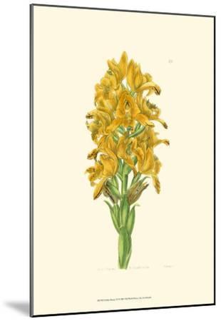 Golden Beauty IV-Sydenham Teast Edwards-Mounted Art Print