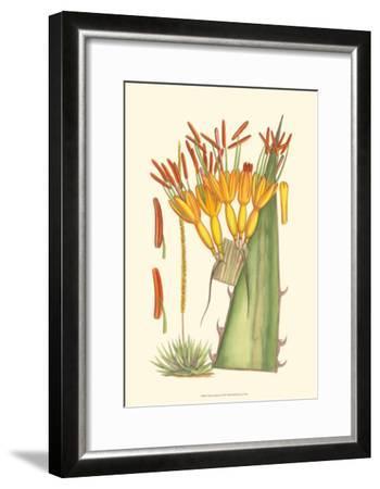 Vibrant Tropicals I-Samuel Curtis-Framed Art Print