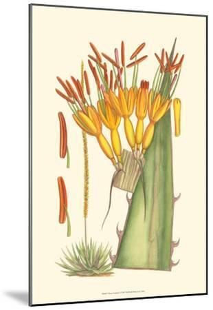 Vibrant Tropicals I-Samuel Curtis-Mounted Art Print
